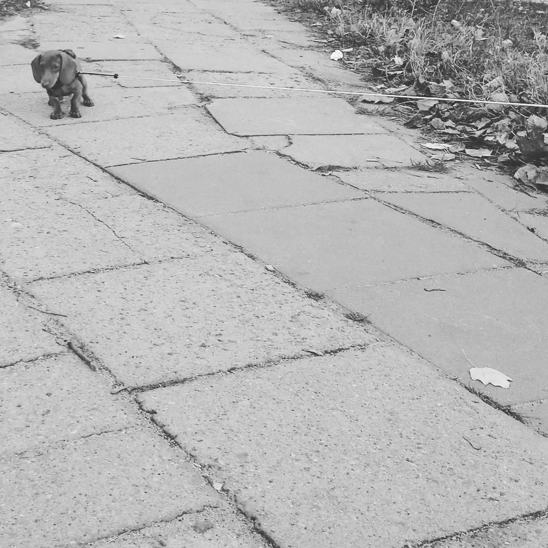 Dalej nie id I do not go anymore mamswojezdanie babydoghellip